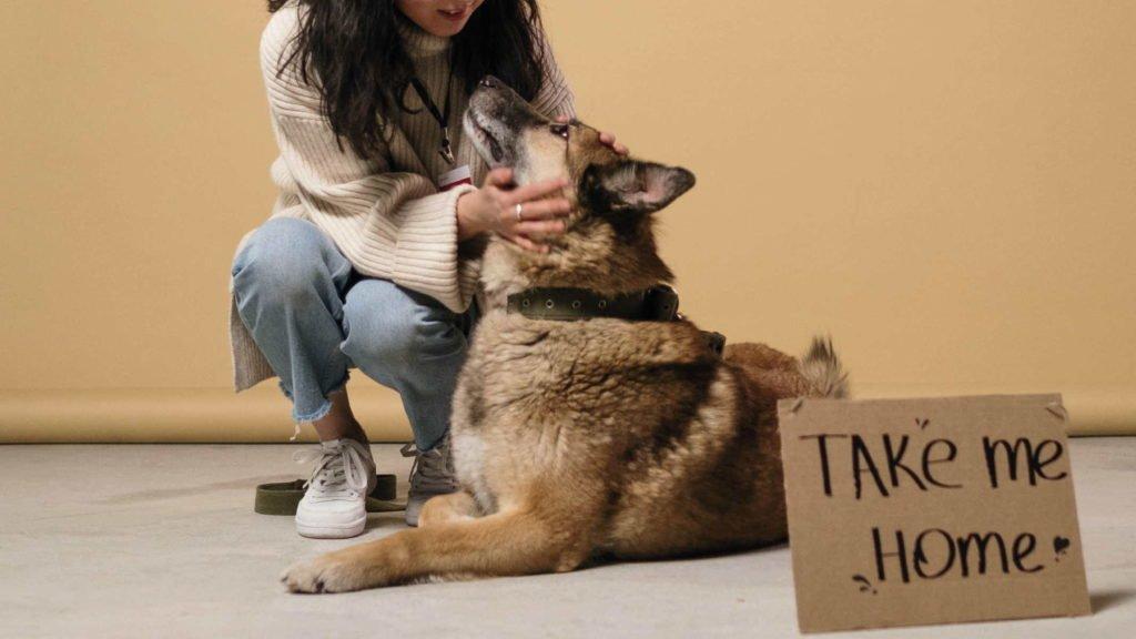 Девушка гладит бездомную собаку