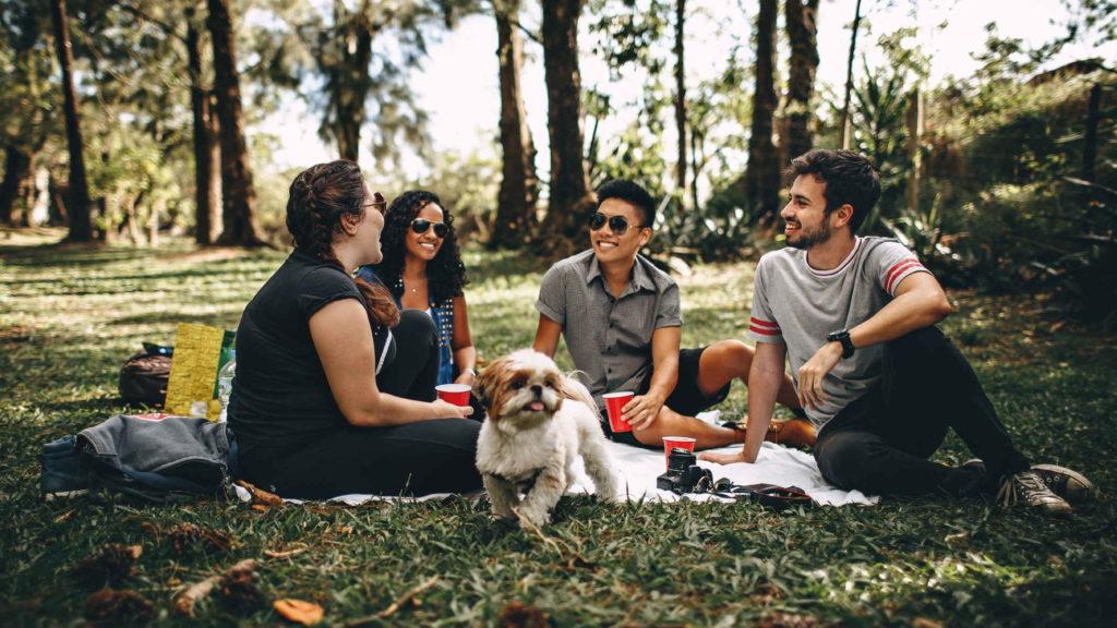 Компания друзей с собакой сидит на пикнике